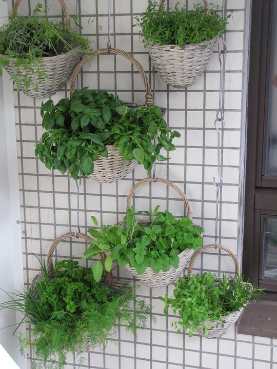ierburi_aromatice_pe_balcon